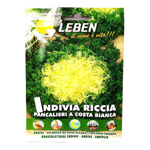Leben - Indivia Riccia - Seeds-The Italian Shop