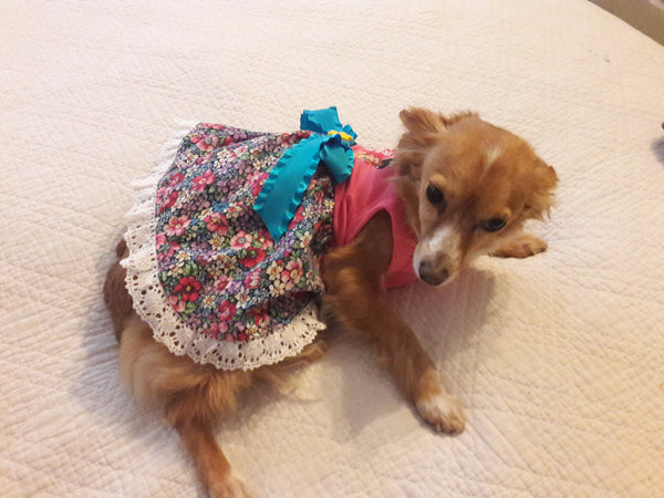 Disney Doggie Princess Dress