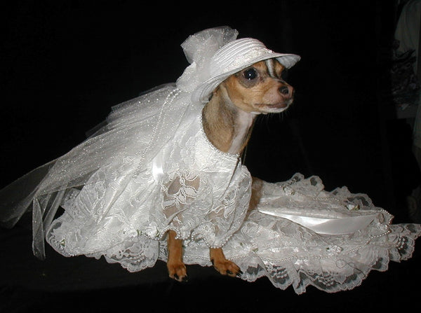 Ultimate Dog Wedding Dress