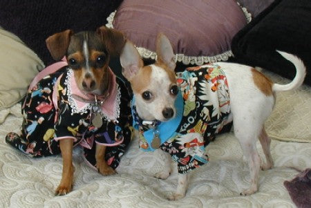 Buttercup & Peanut Pet Clothing, Accessories and Supplies