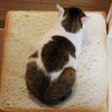 Cat Bread Bed