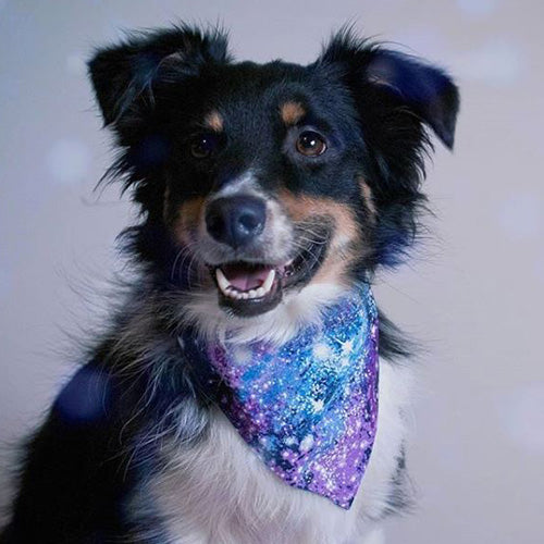 Galaxy Dog Bandana - Paws & Prints Studio