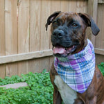 Lavendar Plaid Dog Bandana - Paws & Prints Studio