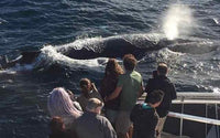 Brekkie, BBQ Lunch or Luxury Cruise with Whales with Oz Whale Watching - Breakfast Cruise