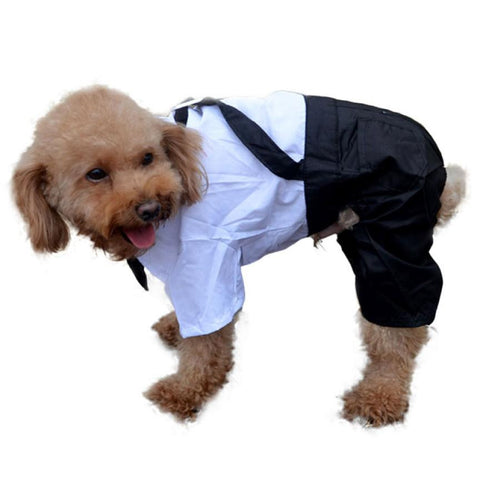 Dog Suit And Suspenders Outfit