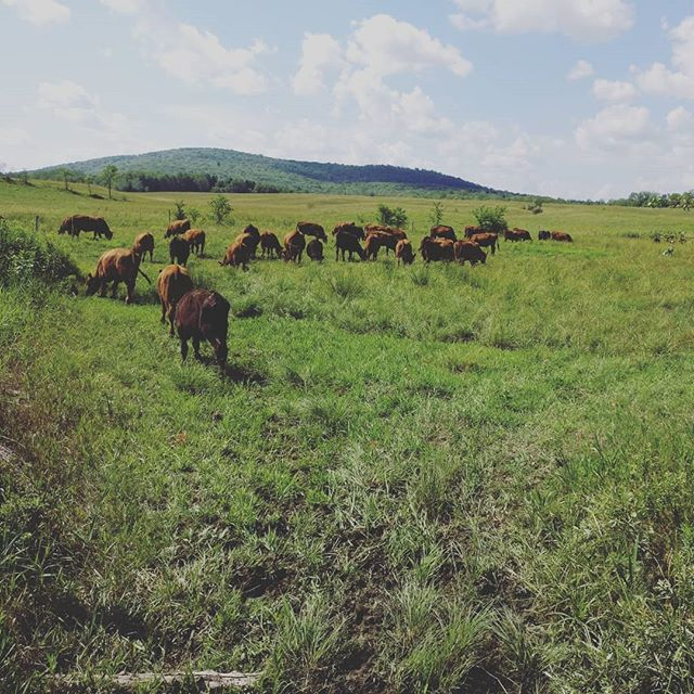 We're Hiring! Job posting: Packing, Grazing and Herd Hand