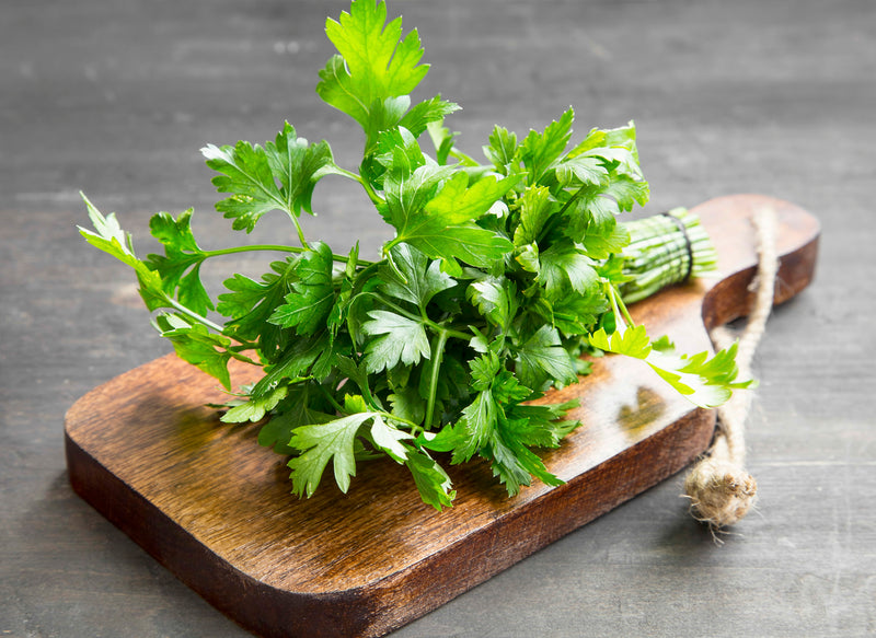 Using Parsley As A Powerhouse Herb