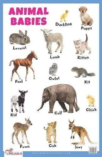 Animal Babies - Thick Laminated Primary Chart