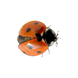 [Affordable Online Bug Shop In Australia] - Bug Shop