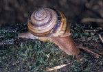 Snail Life Cycle Kit