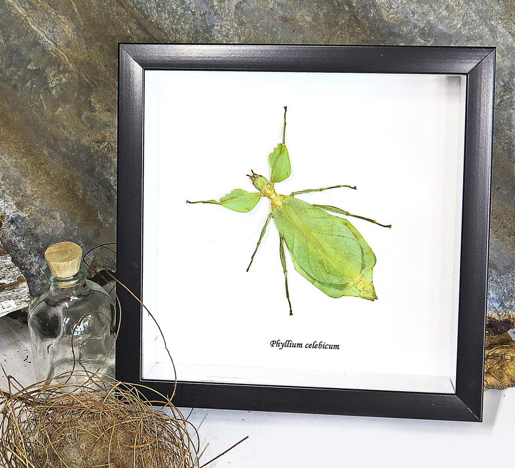 Leaf Insect Gift Frame