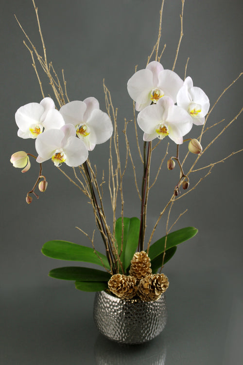 Double Stalk White Orchid