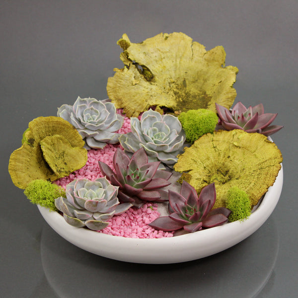 Pop Rocks Succulent Garden