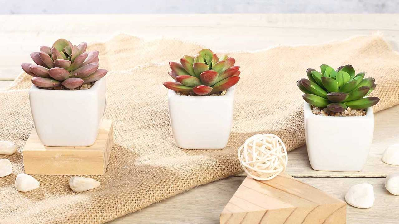 "3 pcs 3"" Assorted Artificial Faux Realistic Small Echeveria Succulent Plants with Pots 