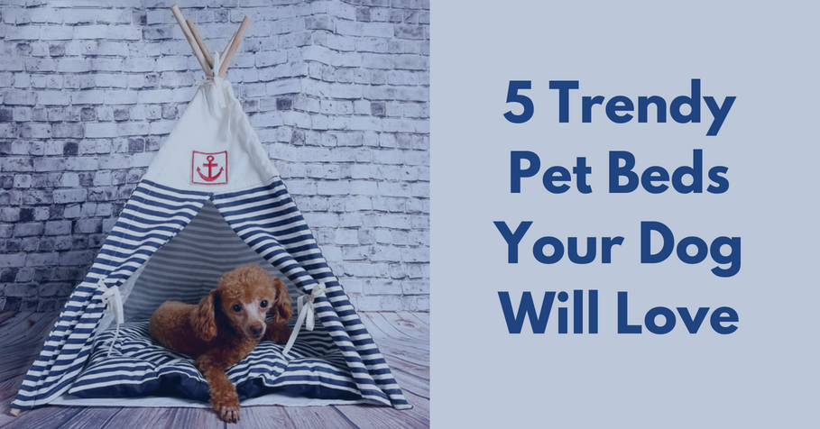 5 Trendy Pet Beds Your Dog Will Love