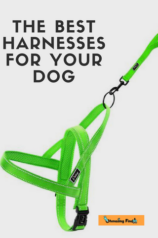THE BEST HARNESSES FOR YOUR DOG