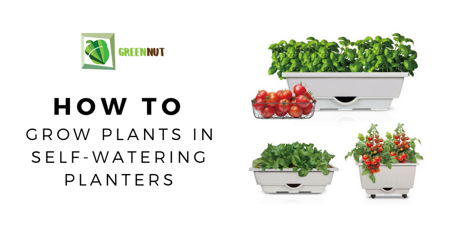 How To Grow Plants In Self-Watering Planters