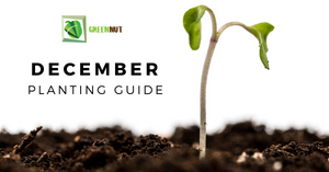 What To Plant In December