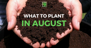 What To Plant In August