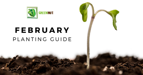 February Planting Guide