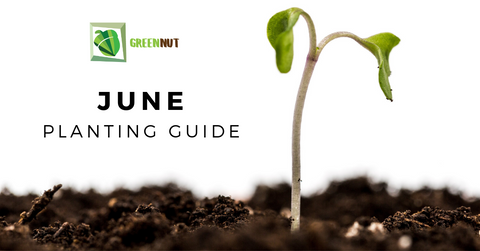 June planting guide what to plant in winter