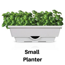 Evergrow Self-Watering Planters [Grey] - Available in three sizes