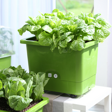 Evergrow All-In-One Self-Watering Planter