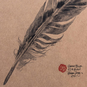 Great Blue Heron Feather