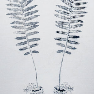 Licorice Fern-Front & Back