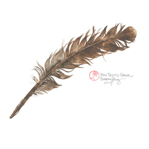 Red Tailed Hawk Feather / Cascade Head, Oregon