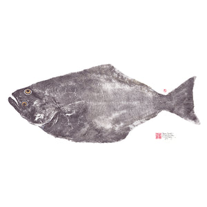 North Pacific Halibut / Hippoglossus stenolepis