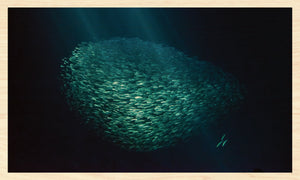 School of Anchovy in the light