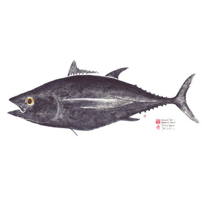 Full Length Pacific Albacore Tuna / Thunnus Alalunga