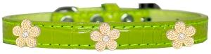 Gold Flower Widget Croc Dog Collar Lime Green Size 20-Pristine Pups