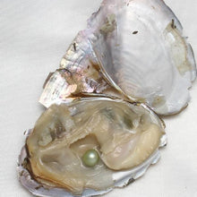 10pc Individually Vacuum packed Oyster Pearls - AEIGARTZ.COM