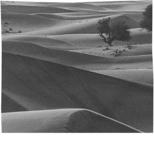 Black and White Desert - ARTPICS