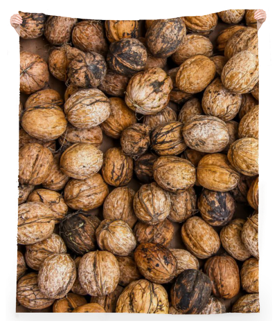 Walnuts pattern - ARTPICS