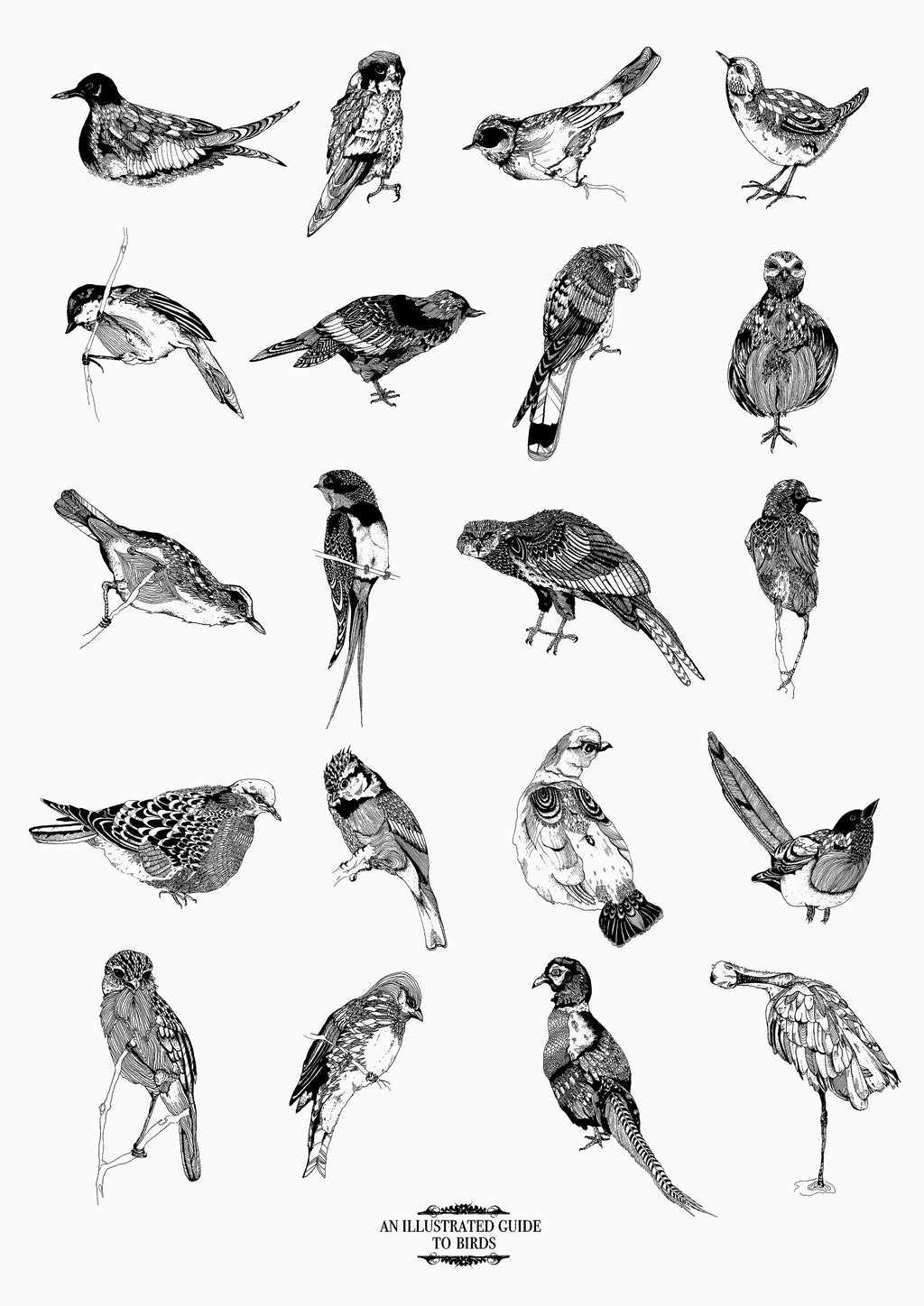 Illustrated Guide to Birds