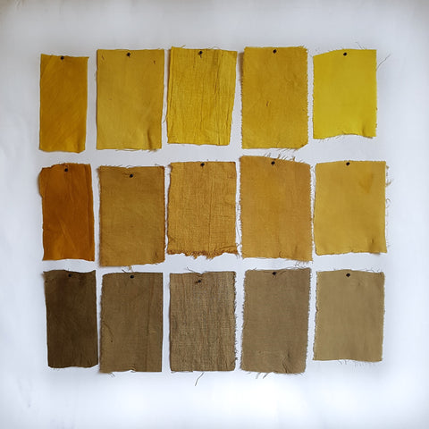 Osage Orange Dye Samples