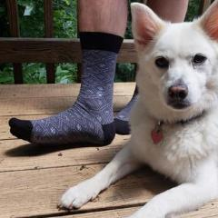 Socks That Help Dog Shelters