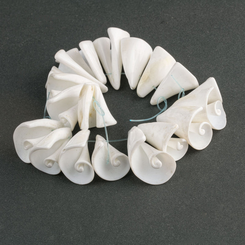 Strombus Luhanus White Lily Cut shells. Strand of 9 pieces. b15-she397