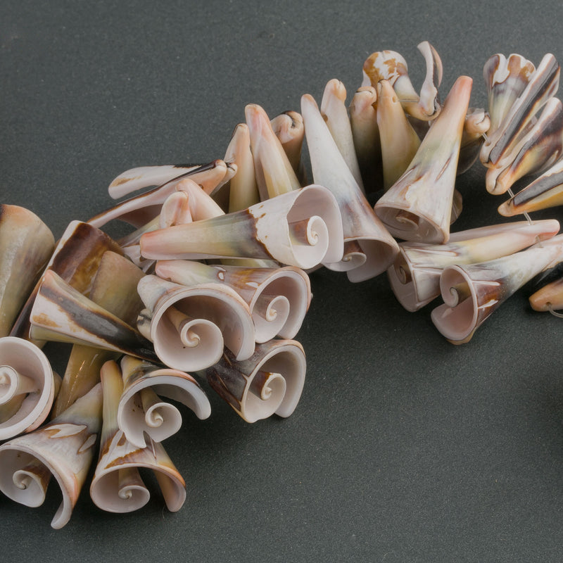 Vintage Strombus Luhanus  Lily Cut shells. 6 pieces. b15-she398