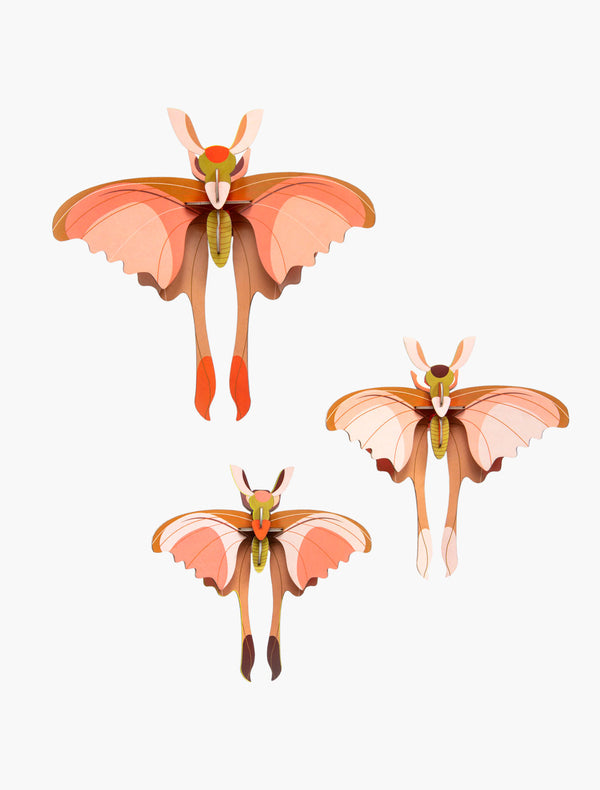 Comet Butterflies, set of 3