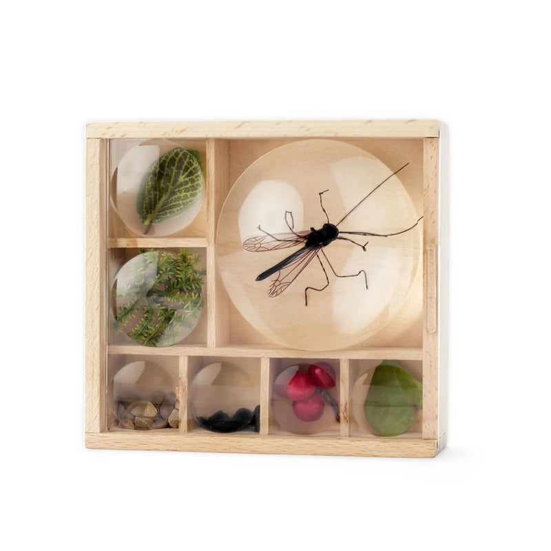 Magnifying Bug Box