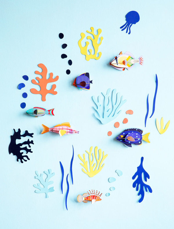 Wall of Curiosities - Fish Hobbyist