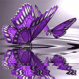 Purple Butterflies - Diamond Art Kit