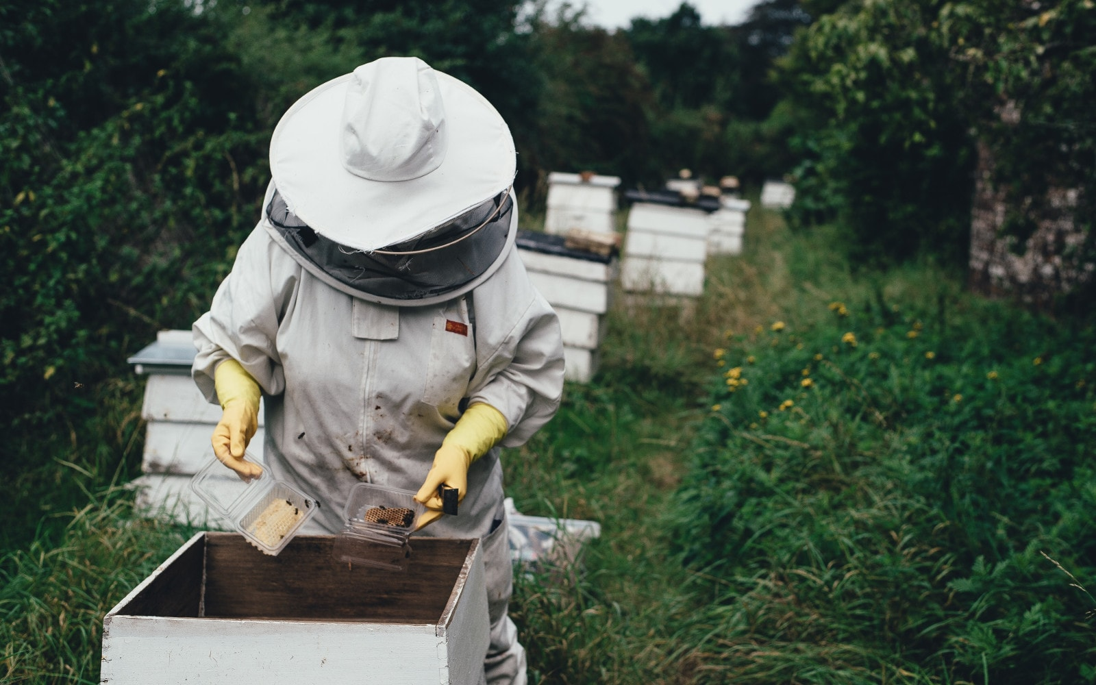 3 things to know before you buy a bee hive