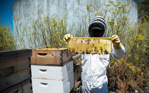 Think Like an Apiarist: 5 Tips Only Expert Beekeepers Know