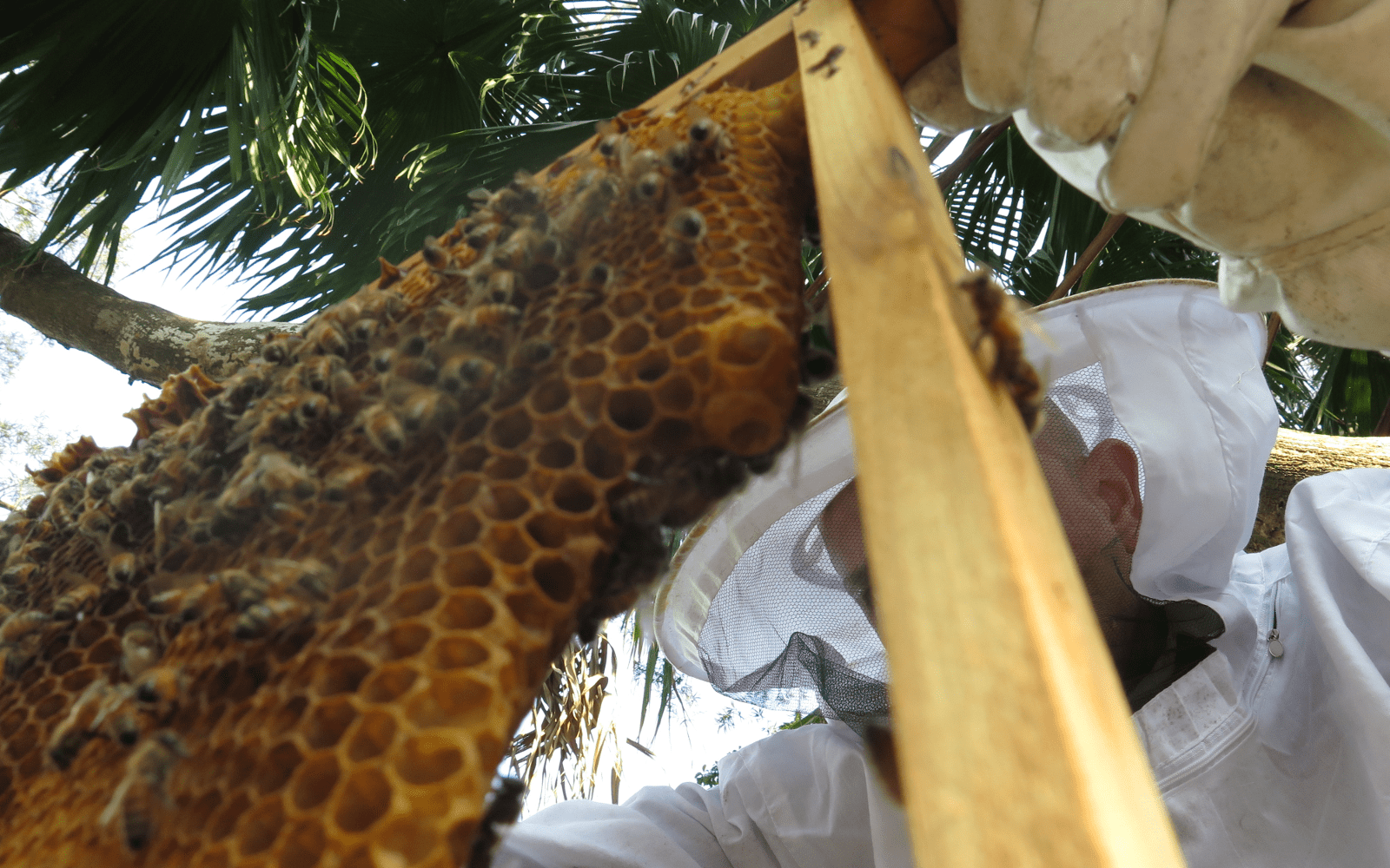 Beekeeping for Kids: The A-Bee-C's of Helping Children Get Started