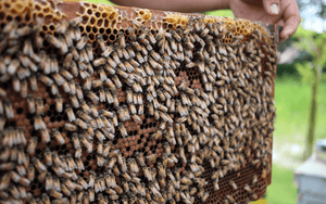 What To Do When Your Bees Are Making Too Much Honey